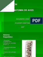 Anatomia de Aves