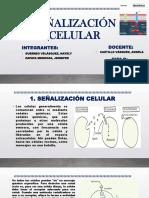 Señalización Celular Falta Terminar