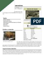 Bison Bonasus Caucasicus