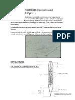 Larvas Estrongyloides y Huevos de Uncinarias.docx SALOMON