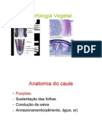 anatomia_do_caule_folha_e_flor