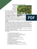 Beneficios Del Palo de Mandarina