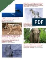 Animales en Peligro de Extincion