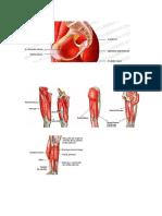 imagagenes anatomia