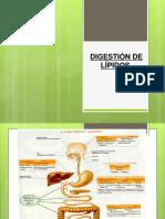 Digestión de Lípidos