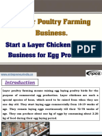 Layer Poultry Farming Business