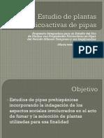 Estudio de plantas psicoactivas de pipas.pptx