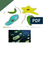 sains mikroorganisma