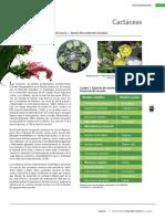 17 Cactaceas.pdf