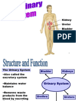 Pathology of Urinary System