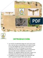 GUSANOS DIAPOSITIVAS.pptx