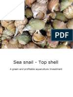 Sea Snail - Top Shell Business Proposal_opt
