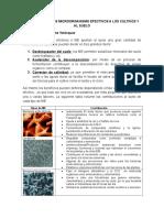 Beneficios de Los Microorganismo Efectivos a Los Cultivos y Al Suelo