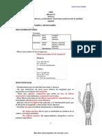 Funcion Motora de Medula