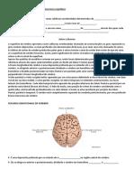 Revisão Da Aula de Neurociências e Processos Cognitivos