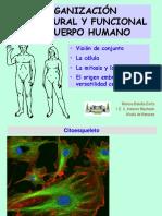 01 C Humano DIAPO B