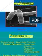 Pseudomonas-Infeksi Nosokomial