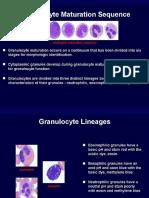 WBC Granulocyte Maturation