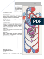 actividad cardiovascular.pdf