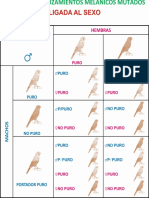 Genetica canarios.pdf