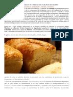 Sobre Las Harinas Extruidas y Su Utilización en El Pan Sin Gluten