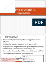 Immunology Chapter 4A Phagocytosis