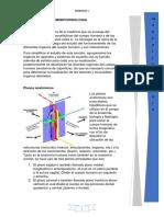 Anatomia Pm
