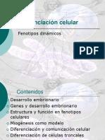 4to-electivo_diferenciacion_celular.ppt