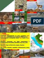 2-Las Once Ecorregiones - Geografía 2do Secundaria - 2018