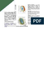 Foyeto (biologia)