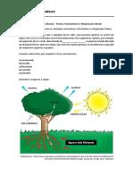 Exercitando_Ciências_Fotossíntese_Respiração (1).pdf
