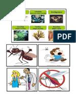 Algas y Malaria