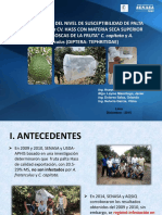 ESTUDIO PALTA HASS CON M S  SUPERIOR A 29% (04-12-15).pptx