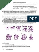 Anatomia e Histologia Do Periodonto 2 PDF