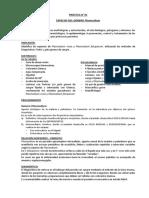 PRÁCTICA N° 5 Plasmodium