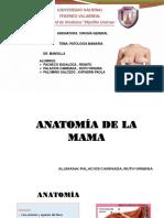 Sem.patología Mamaria .