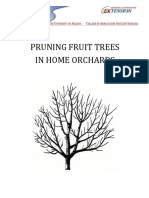 ! Pruning Fruit Trees in Home Orchards - UofA