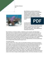 La Riqueza Natural y Cultural de Banco Chinchorro(Funciones)