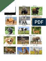 15 Animales Con Su Nombre en Ingles