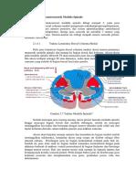 Traktus Somatosensorik Medulla Spinalis (2)