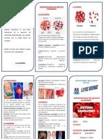triptico sistema sanguineo 5.docx