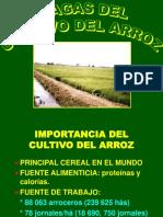 Principales Plagas Del Arroz