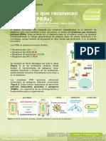 9. Pattern Recognition Receptors (Receptores que reconocen patrones (PRRs)) (1).pdf