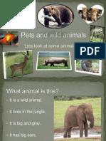 Pets and Wild Animals