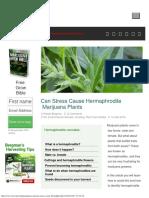 Can Stress Cause Hermaphrodite Marijuana Plants