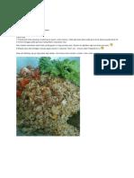 Resepi Nasi Goreng Cili API