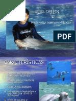 el-delfin-1196167204398661-2
