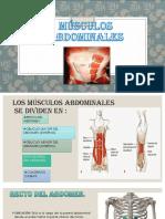 Anatomia Musculos Del Abdomen y Hombro
