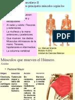 anatomia funcional - fccafd granada