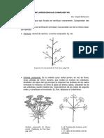 Complemento Teórico Inflorescencias Compuestas (3)
